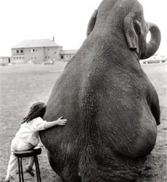 Elephant_friend_girl
